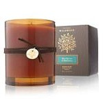 Thymes Wildwood Blue Spruce & Elderberry Candle