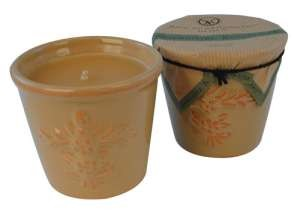 Votivo Westminster Bayberry candle-terracotta jar